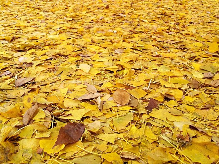 Yellow Leaves Autumn Leaf On The Ground Leaf Leafs Photography Leaf Fall Time Season  Old Background Textures And Surfaces Pattern Maple Leaf Change Nature