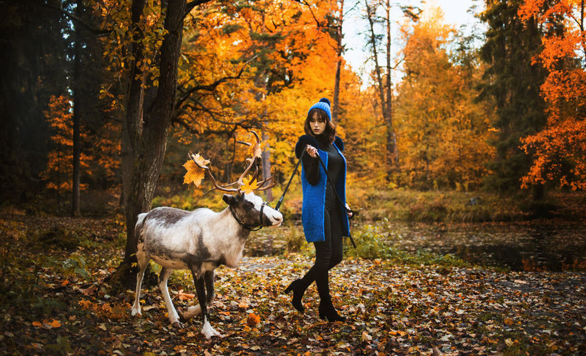 Woman with reindeer walking in forest during autumn