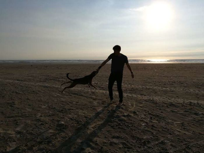 Sand Beach Dog Sunset Silhouette One Person One Man Only People Sun Full Length Desert Men Adult Only Men Pets Sea Nature Landscape Sport Shadow Your Ticket To Europe IJmuiden Ijmuiden Aan Zee Investing In Quality Of Life The Week On EyeEm Second Acts