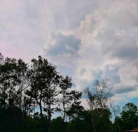 Tree Sky Forest Cloud - Sky Nature Low Angle View No People Outdoors Day Beauty In Nature