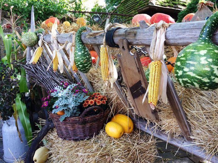 Tripsdrill - Herbstzeit Erntezeit Thanksgiving Autumn Pumpkin Tripsdrill Day Nature Multi Colored Growth First Eyeem Photo