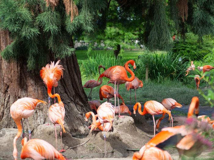 Flamingo Animal