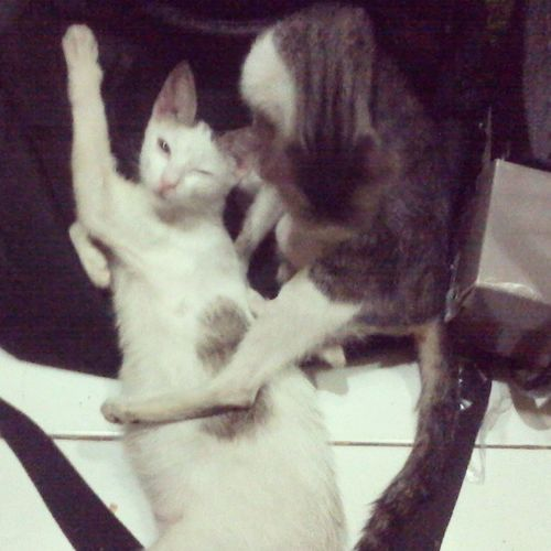Hello there Mr. And Mrs. CAT. are there gonna be babies on the way? :)) Namukaw Nangalaw BadHuman