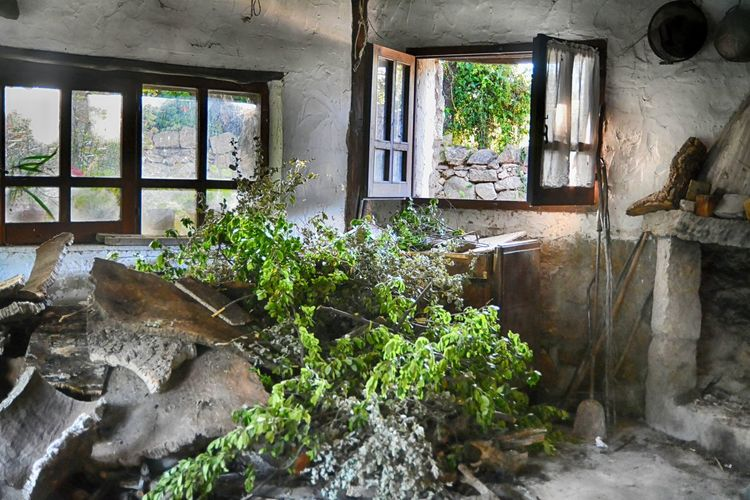 Plants in abandoned building