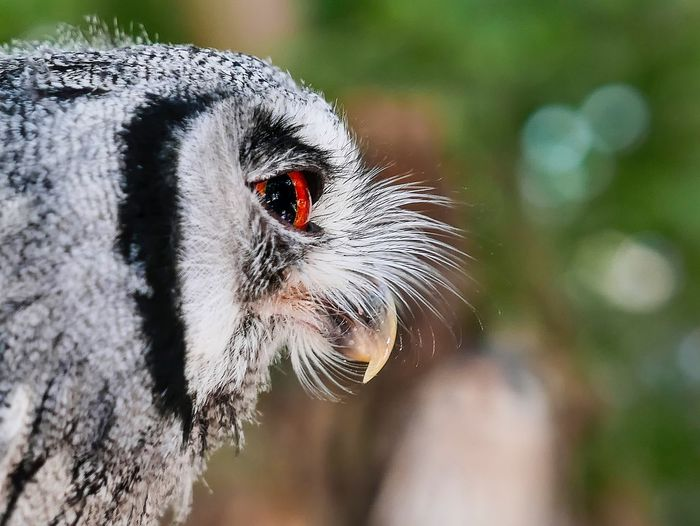 Owl Animal Animal Themes Insect One Animal Close-up Focus On Foreground Invertebrate Animal Wildlife Animals In The Wild No People Nature Beauty In Nature Outdoors Animal Body Part Animal Head