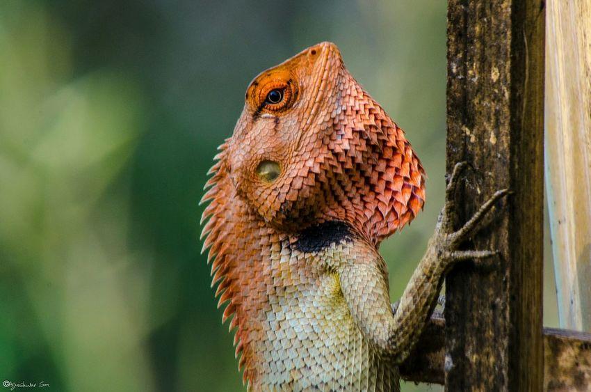Give me some sunshine! Lizard Sunbathing Nofilter Nikon D7000 Eye4photography  EyeEm Best Shots EyeEm Nature Lover