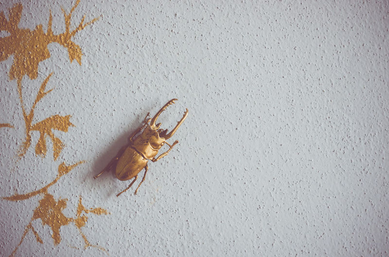 Close-up of beetle by decoration on wall