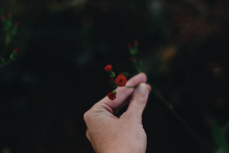 Cropped image of hand holding flower growing on plant
