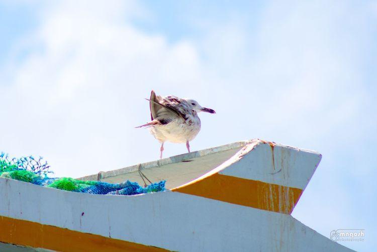 Bird Animal Vertebrate Sky Animal Themes Day Animals In The Wild