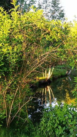 See the beauty of nature.... Nature Growth No People Green Color Outdoors Day Water Grass Beauty In Nature Tree Close-up Wendland GetbetterwithAlex Original Picture Tranquil Scene Reflections In The Water Beauty In Nature