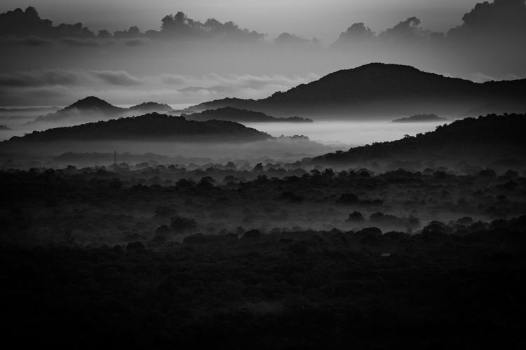 Atmospheric Mood Beauty In Nature Cloud - Sky Dambulla Day Dramatic Sky Environmental Conservation Fog Forest Landscape Lion Mountain Nature Nature Reserve Outdoors Pidurangala Rock Scenics Sky SriLanka Storm Cloud Sunrise Tree Tree Area WoodLand
