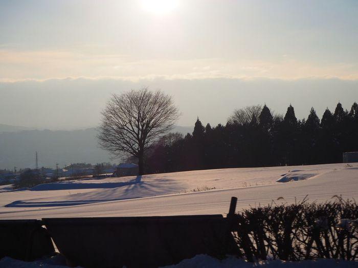 雪のあとのお気に入りの木… お気に入りの木 いつもの場所 Tree 木 空 信州 冬の光景 Nagano, Japan Winter Snow Nature EyeEm Nature Lover My Sky Sky