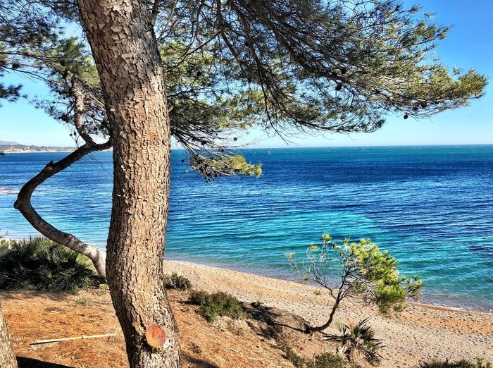 #playa #perello Water Tree Sea Plant Beauty In Nature Scenics - Nature Tranquility