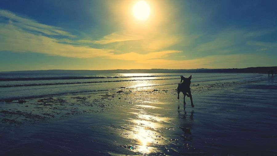 Sea Beach Nature Reflection Silhouette Sunset Horizon Over Water Full Length Beauty In Nature Sand Sky Tranquility People Outdoors Dog Staffies Staffordshire Bull Terrier Day Seaside Filey Seafront Pet Portraits