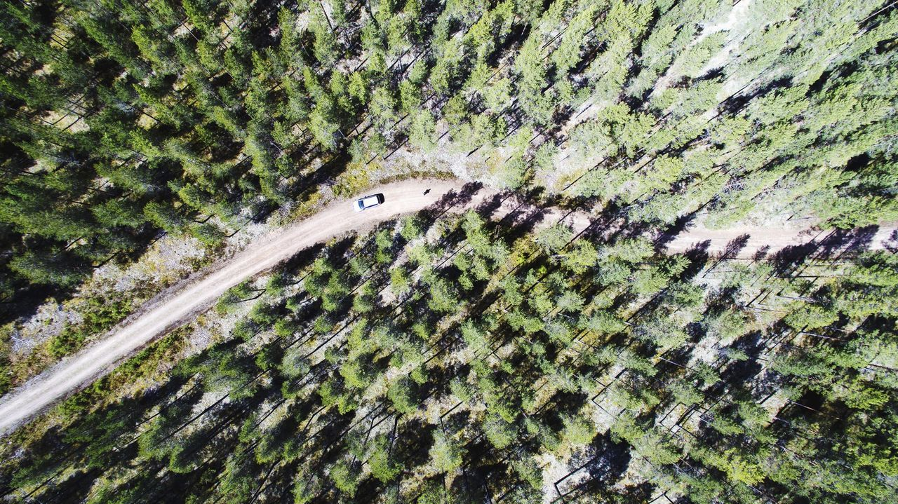 Directly above shot of car on dirt road in forest