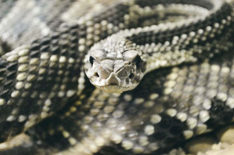 🐍 EyeEmNewHere One Animal Animal Wildlife Animal Themes Animals In The Wild Reptile Close-up Day Snake Animal Scale Nature Outdoors