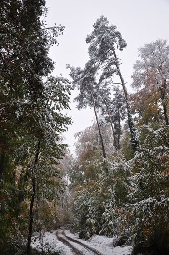Autumn Autumn Colors Autumn Leaves Foliage Plant Forest Path Forestry Weather Phenomenon Beech Trees Cold Temperature Early Snowfall Forest Nature Outdoors Snow Snow Bending Trees Snow Covered Tree Unusual Weather Weather Condition Winter Damage