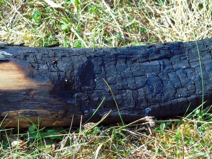 Burnt log from a camp fire. Ash Beach Beach Photography Beachphotography Black Burnt Burnt Wood Charcoal Charred Charred Wood Close-up Day Elevated View Eye Em Scotland Grass Green Color Growth Log Nature No People Outdoors Scotland Uk Wood Wood - Material
