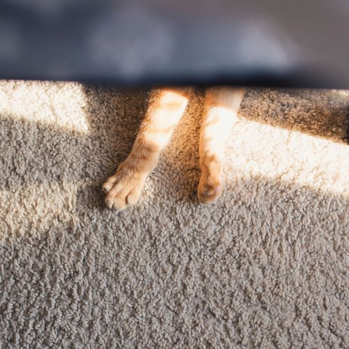Low section of person standing on rug