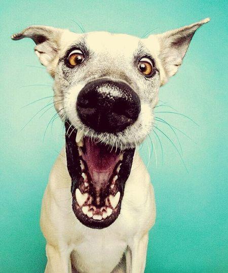 Taking Photos Hello World Dogstagram Dog Love Dogs Smile Vivirlavida Enjoying Life Selfie ✌