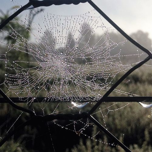 dewy spiderwebs in the morning light Arachnid Barb Wire Fence Cobweb Dandelion Dawn Of A New Day Delicate Dew Drops Fence Fragile Beauty Garden Grass Insect Light And Shadow Mesh Fence Morning Light Nature Paddock Plant Spider Web Spin Trees Waterdroplets Weeds Wildlife Wire Fence