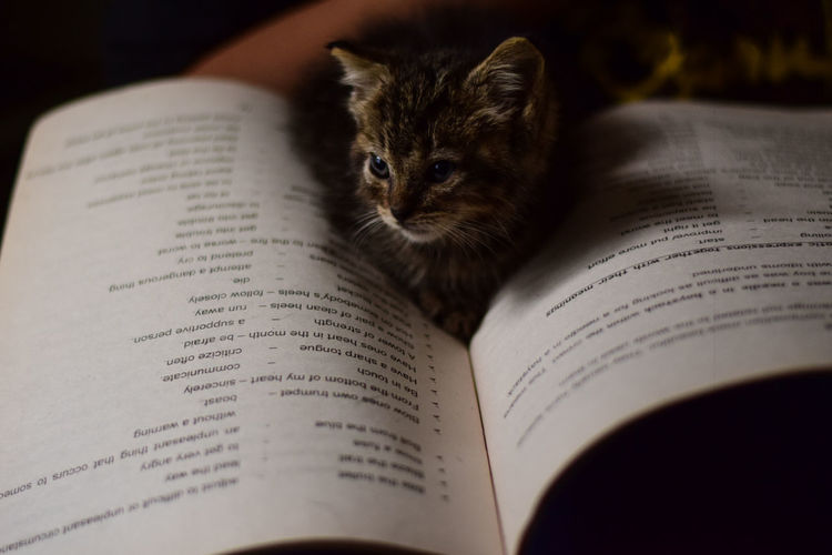 Bookworm Kitten series: 2 Cats Of EyeEm EyeEm Best Shots EyeEm Gallery Animal Animal Themes Book Cat Close-up Communication Domestic Domestic Animals Education Indoors  Kitten Mammal Newspaper Open Page Paper Pets Publication Selective Focus Studying Text Whisker