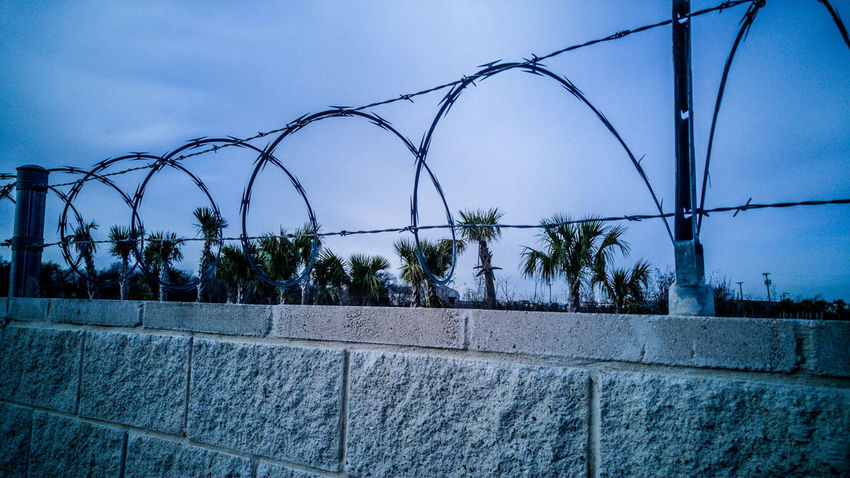Precious palms Trees TreePorn Barbwire Wall Industrial Outside Mobilephotography Mobile Photography Nursery Garden Sky Blue Security