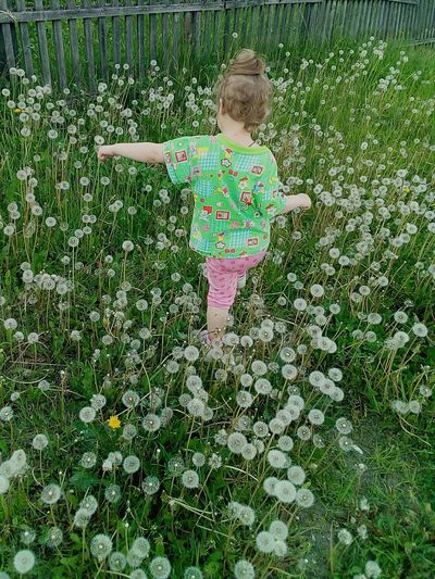 Dandelion Field Colorful Flower One Person Freshness Outdoors My Little Princess ♡  Babies Only One Girl Only Green Color