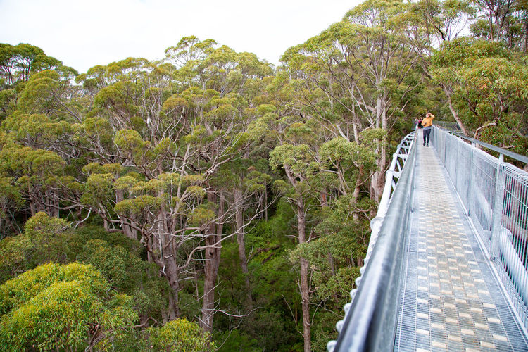 Tree Plant Nature Railing Direction Architecture Built Structure The Way Forward Bridge Walking One Person Real People Beauty In Nature Connection Transportation Forest Day Growth Bridge - Man Made Structure Footbridge Outdoors Tree Top Walk From Above
