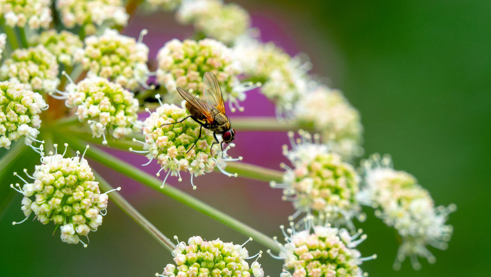 Insket Nature Summertime Animal Animal Wildlife Beauty In Nature Daylight Fliege Flower Flower Head Forest Insect No People One Animal Outdoors Summer