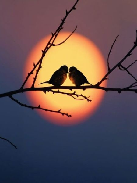Real beauty of nature... Perching Silhouette Red Full Length Animal Themes