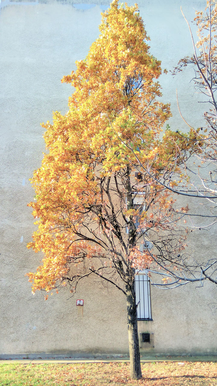 autumn, tree, change, nature, beauty in nature, leaf, day, outdoors, tranquility, no people, branch, scenics, growth, sky, maple