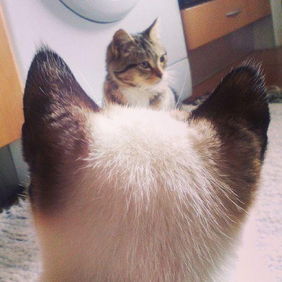 Master superviser... Cookiethecat Sandokanthecat Cat Catsagram Catlovers Sandokanthecat