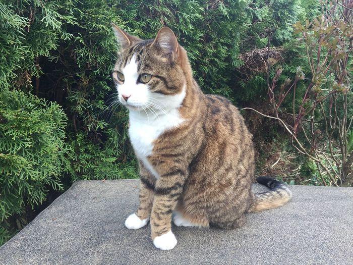 CAT Cat Looking