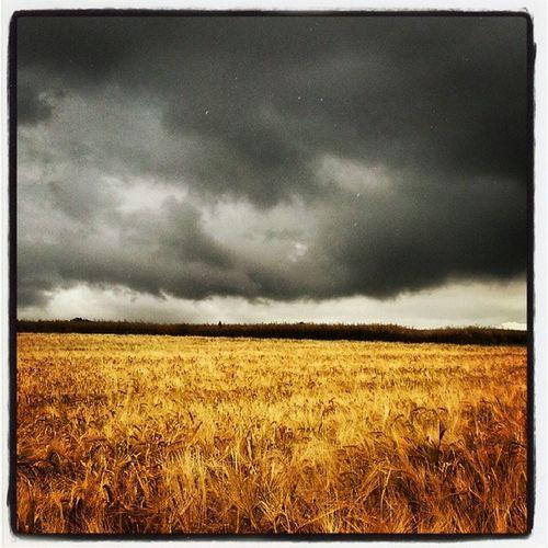 Spaziergang in Besigheim - Schwarze Wolken und goldenes Korn