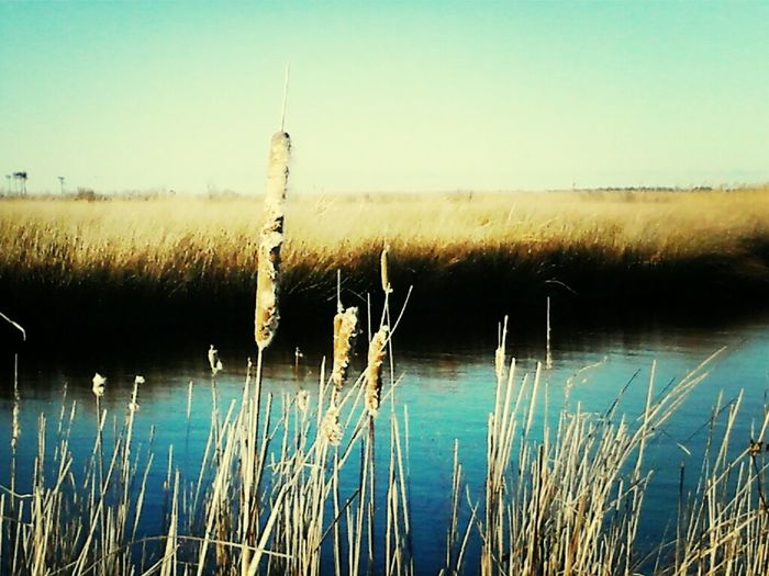 Nature Salt Life Get Lost Coastal Carolina