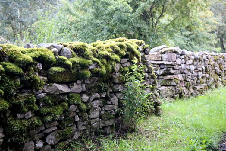 Stone wall in a forest