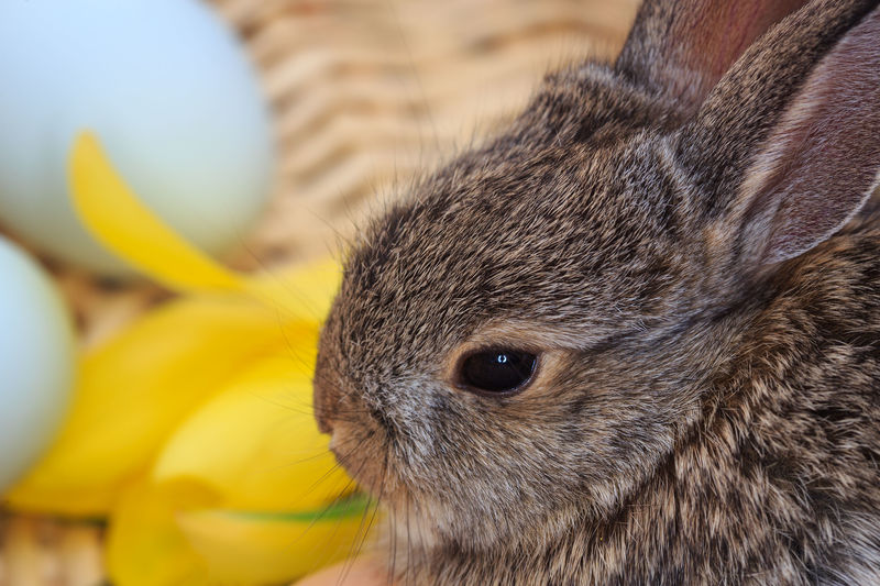 Easter bunny Baby Bunny Cute Animals Bunny Love Animal Themes Peter Cottontail Baby Rabbit Baby Animals Animal Rabbits Bunny Rabbit Pets Easter Basket  Animal Head  Close-up One Animal