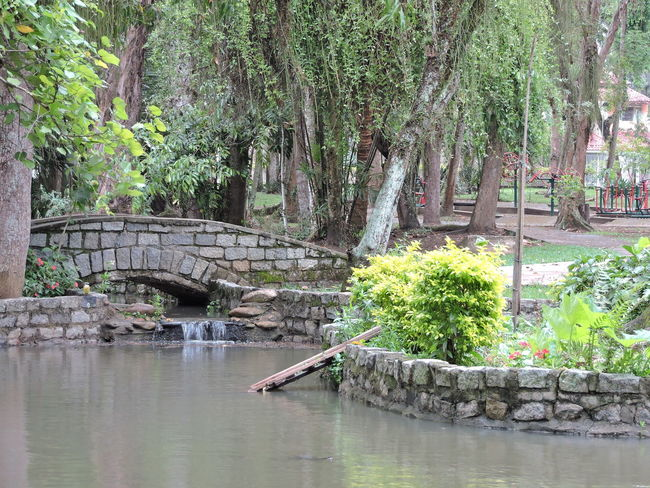Lake Grove Architecture Beauty In Nature Bridge - Man Made Structure Built Structure Day Green Color Grove Lake Lake View Nature No People Outdoors Rafaelvilalta Tree Vwolfenbr Water
