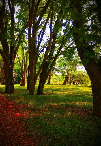 Tree Tranquility Scenics Beauty In Nature Outdoors Grass Tranquil Scene