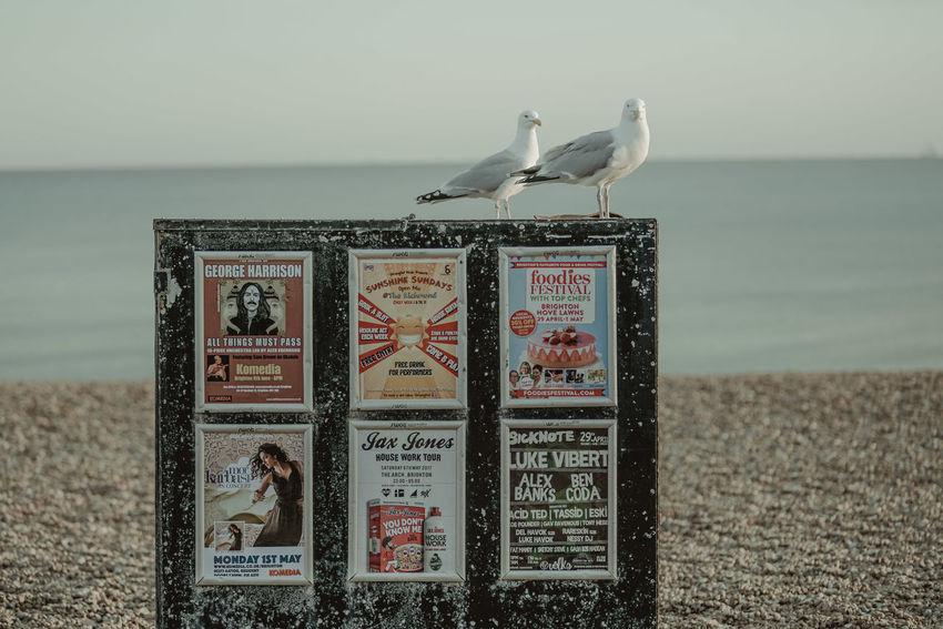 Brighton Brighton Brighton Beach Brighton Pier Brighton Pier UK Cinematic Sunset_collection United Kingdom Afternoon, Beach Birds Brighton Uk depth of field Evening Golden Hour People Photography Pie Seaside Sundown Sunset Uk
