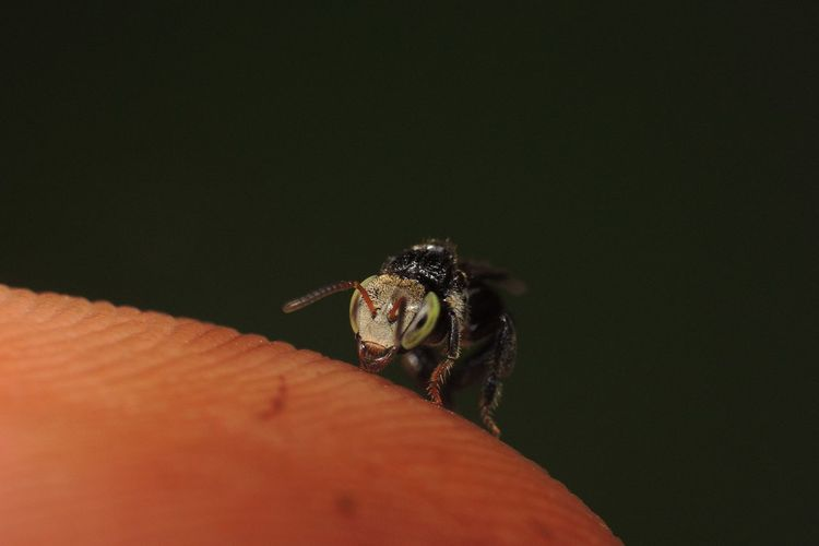 Close-up of insect on human skin