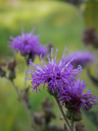 Purple Flower Plant Nature Growth Beauty In Nature Close-up No People Outdoors Fragility Freshness Flower Head Day Textures Growth Exploring Plants And Flowers Mother Nature Plant