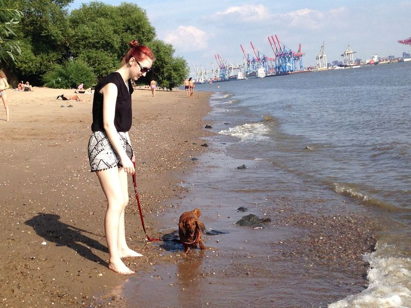 BEACHPLEASE Dackel Elbstrand Hamburg Harbour View Summertime Beach City Trip Dog Lifestyles Outdoors Pets Sand Schwimmen Sky Sommer Water Young Adult