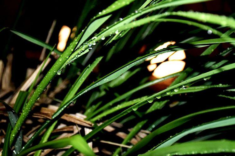 Green Grass Water Drops Nightshot Lighting
