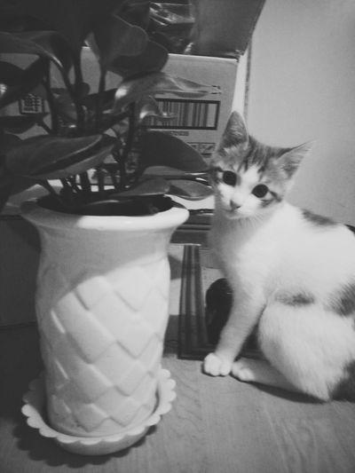 Cat I Love My