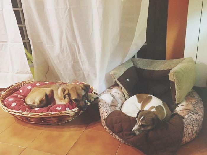 Cani ovunque
