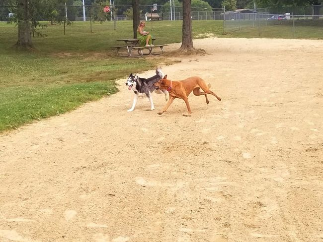 Husky dog Tree Animal Themes Day Nature One Animal Dog Pets Outdoors Domestic Animals Mammal Real People Sky