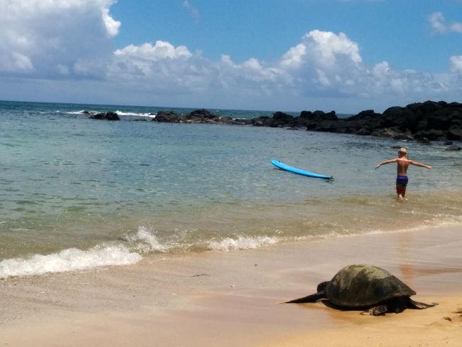 Laniakea Beach Oahu, Hawaii Turtle
