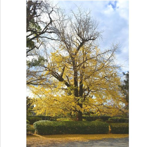 Spring Springtime Trees Trees And Sky Tree Branches Treescollection If Trees Could Speak Paint The Town Yellow
